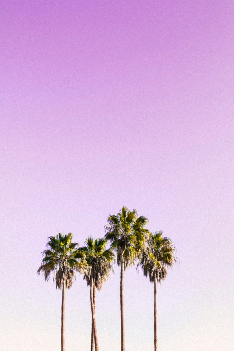 palm wallpaper 165